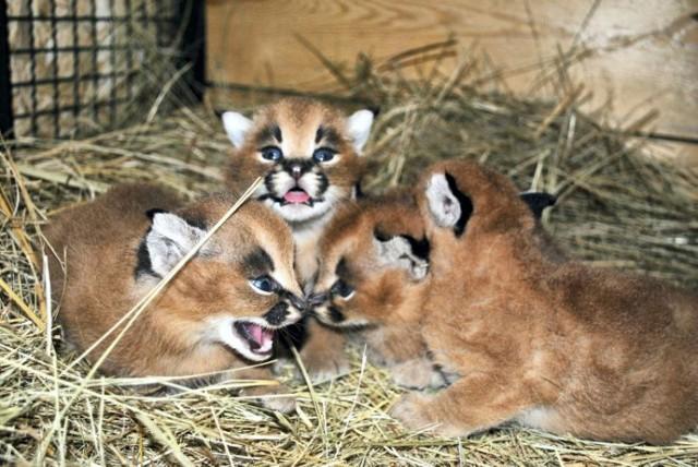 Ogród Zoobotaniczny ma nowych mieszkańców!