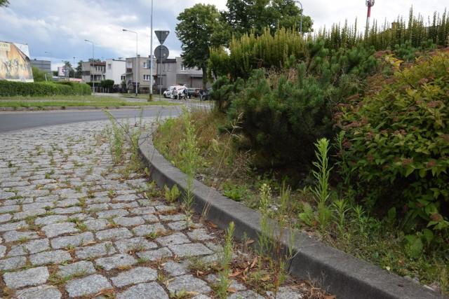 Zarośnięte rondo koło Kauflandu i ostatnie zderzenie motocykla z osobówką na skrzyżowaniu bez świateł na skrzyżowaniu starej obwodnicy z ulicą Kopernika