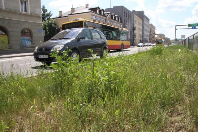 Na ulicy Żelaznej, jak na innych w centrum trawa była już raz koszona, ale szybko wyrosła i powinna być ponownie przycięta zanim zakwitła.
