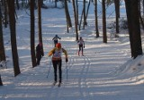 Ruszyła wypożyczalnia nart biegowych w Parku na Zdrowiu