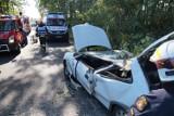 Konar drzewa spadł nagle na jadące auto [ZDJĘCIA]