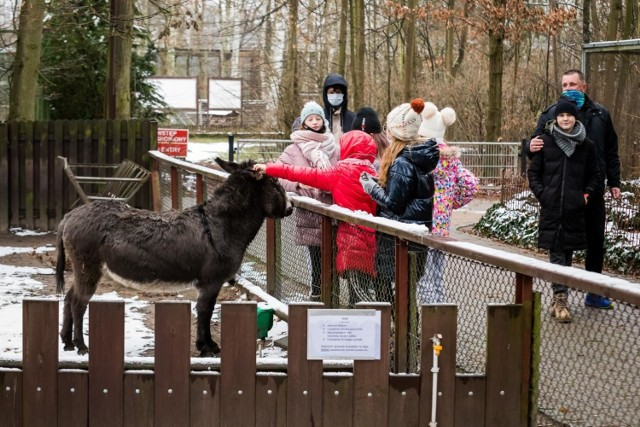 Ferie w myślęcińskim zoo potrwają do 17 stycznia. Uczestnicy zabawy będą mieli okazję wcielić się w rolę małych odkrywców.