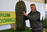 Wystawa gigantycznych warzyw. Kabaczek waży 50 kilogramów, ogórek ma 65 cm długości ZDJĘCIA