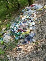 Śmieci w lasach zmorą leśników. Posprzątać bałagan może każdy!