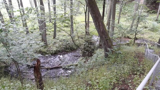 Regionalna Dyrekcja Ochrony Środowiska w Bydgoszczy zgodziła się na planowany przebieg trasy S10, skutkujący m.in. wycięciem ok. 300 hektarów lasu i zasypaniem nie tylko urokliwych, ale pożytecznych źródlisk.