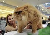 Miedzynarodowy Dzień Kota: Zobacz ZDJĘCIA kotów zaprezentowanych w Galerii Bałtyckiej