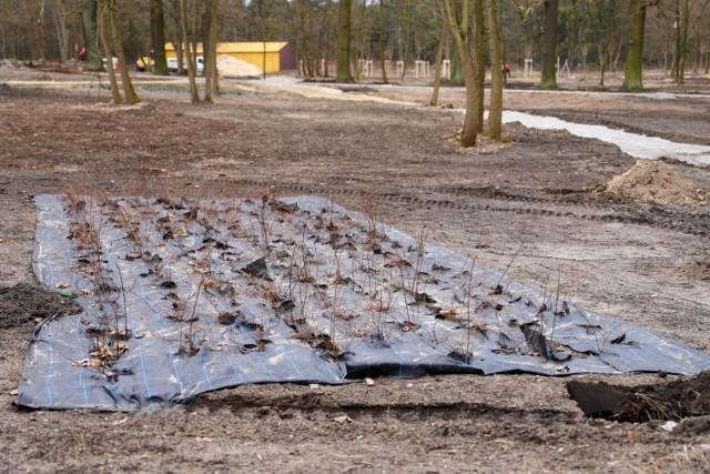 Trzeci etap przebudowy bulwarów w Lublińcu. Są już pierwsze nasadzenia