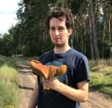 Szymon Kościański pod Włocławkiem znalazł dużego prawdziwka [zdjęcia]
