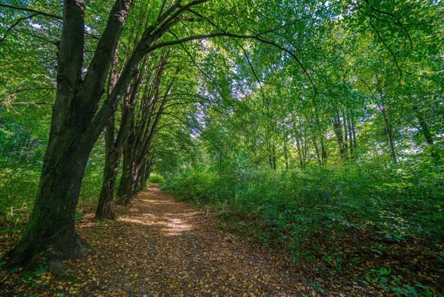 W lecie Park Nawojowski stanowiłby znakomite miejsce dla ochłody i odpoczynku od słońca