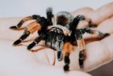 Jadowite pająki i drapieżne skorpiony w Poznaniu! Spotkasz je w Galerii Malta