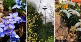 Wiosna w obiektywie naszych Czytelników. Te zdjęcia robią wrażenie! [ZDJĘCIA]