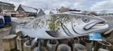 Wielka ryba przebojem kołobrzeskiej, WOŚP-owej licytacji