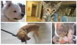 Nowy Sącz. Straż Miejska odłowiła kilkadziesiąt zwierząt. Może ktoś poszukuje psa lub kota? [PAŹDZIERNIK 2021]