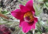 Wiosna w Żaganiu i okolicach! Poznajecie te cudowne ogrody, kwiaty i pejzaże? To Wasze zdjęcia!