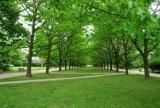 Parki, skwery i zieleńce w Warszawie. Skarby przyrody ukryte w mieście. Tam nie ma tłumów