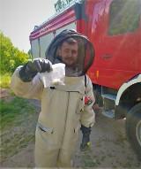 Strażacy z Tuchomia usuwają gniazda owadów i apelują do mieszkańców o rozwagę