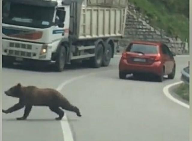Sprawdzamy, czy w Karkonosze wróciły niedźwiedzie. Nie jest to niemożliwe.