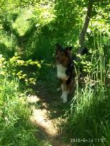 Straż Miejska w Gnieźnie ustaliła właściciela, który przywiązał psa i porzucił go w lesie.