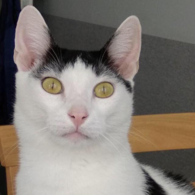 Kot jest wykastrowany, zaszczepiony, około 3 lat, przyzwyczajony do życia w domu. Szuka kontaktu z człowiekiem, lubi się przytulać. Tel: 697893790