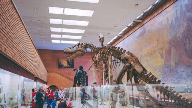 Zapewne wielu z nas w dzieciństwie przechodziło fascynację dinozaurami - ogromnymi stworzeniami, które chodziły po Ziemi miliardy lat temu. Przyczyną ich wyginięcia najprawdopodobniej była asteroida, która uderzyła w Ziemię. Dzień Dinozaura przypada na 26 lutego