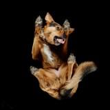Ciekawi was jak wygląda pies od spodu? Rozwiewamy wątpliwości! [GALERIA]