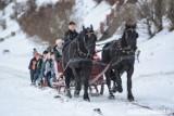 W Wiśle powstaje karta pracy dla konia. W trosce o zwierzęta i wizerunek miasta