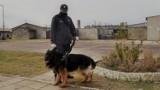 W Zakładzie Karnym w Stargardzie było szkolenie psów specjalnych. Zwierzęta te służą do wyszukiwania przemycanych środków odurzających