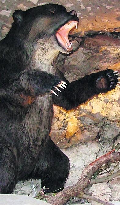Centrum edukacyjne w Jaskini Niedźwiedziej
