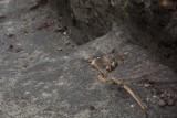 Kraków. Sensacja archeologiczna w Krakowie. Odkryto cmentarz [ZDJĘCIA]