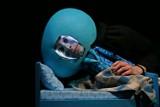 Wrocławski Teatr Lalek: Odd i Luna znajdują siebie i swoje miejsca