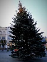 Pucka krzywa choinka na Starym Rynku. Była medialną gwiazdą Bożego Narodzenia 2019 w całej Polsce. Teraz nadszedł czas pożegnania | ZDJĘCIA