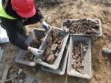 W Luszkowie pod S5 znaleziono szczątki niemieckich żołnierzy. Zobacz zdjęcia