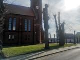 Kuślin. Postępowanie ws. drzew w Kuślinie będzie dalej prowadzone przez prokuraturę. Sąd uchylił decyzję o umorzeniu sprawy