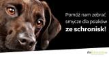 Schronisko dla zwierząt w Bielsku-Białej czeka na smycze