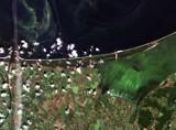 Tak sinice na Bałtyku wyglądają z satelity Sentinel! Niesamowite zdjęcia regionu z kosmosu