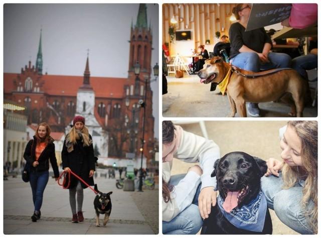 Poznaj schroniskowe psy i... zakochaj się! Te czworonogi czekają na prawdziwy dom.