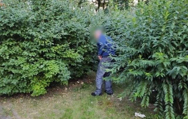 - Bezdomni urządzili sobie legowisko i miejsce do imprezowania i mieszkania pod drzewem  na skwerze miedzy ulicami Zagórską i Karłowicza.