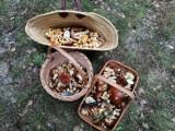 Jesienny wysyp grzybów 2021. Gdzie na kanie, prawdziwki, podgrzybki, kurki. Mykolog potwierdza świetny sezon 5.10.2021