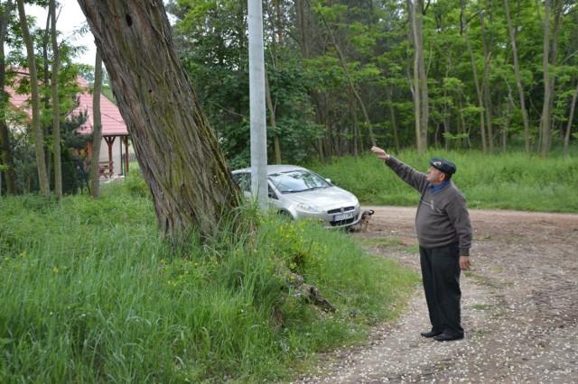 Spróchniałe drzewo zagraża linii energetycznej w Borzewisku