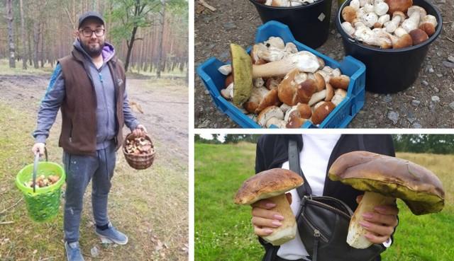 Zobaczcie, gdzie w woj. śląskim jest najwięcej grzybów. Sprawdźcie miejsca podane na kolejnych planszach >>>