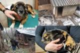 Gehenna psów i kotów w Krościenku Wyżnym. Żyły w koszmarnych warunkach. Właścicielka usłyszała zarzuty znęcania się nad zwierzętami