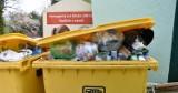 Nawet 84 zł za osobę. Wysoka kara za brak segregacji śmieci w Limanowej
