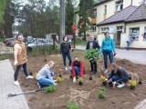 Akcja kwiatek dla medyka. Sadzili drzewa, kwiaty i krzewy przed Punktem Szczepień Powszechnych w Wolicy. ZDJĘCIA