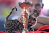 Międzynarodowa Wystawa Kotów Rasowych na Hipodromie. Podczas wystawy można było zobaczyć ponad 240 kotów [zdjęcia]