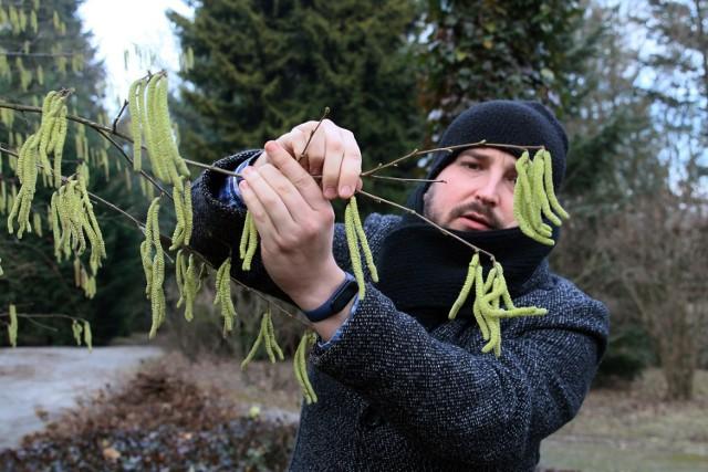 - Z moich obserwacji wynika, że to pierwszy rok, kiedy rośliny tak szybko zaczynają szykować się na wiosnę - mówił mgr Błażej Maciorowski