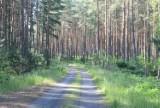 Atak na rowerzystkę w lesie w Bydgoszczy. Pytamy policję o sprawę