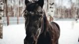 Koń na ulicach Włodawy. Zrobił zamieszanie i wrócił do zagrody