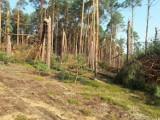 Region. Obowiązuje okresowy zakaz wstępu do lasu