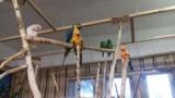 Co dzieje się w lubelskiej papugarni? Miłośnicy zwierząt zaniepokojeni. Co na to właściciel?