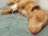 Dwa psy porzucone pod Radzyniem Podlaskim. Zakopano je w zawiązanym worku. Jedno ze zwierząt było w stanie rozkładu